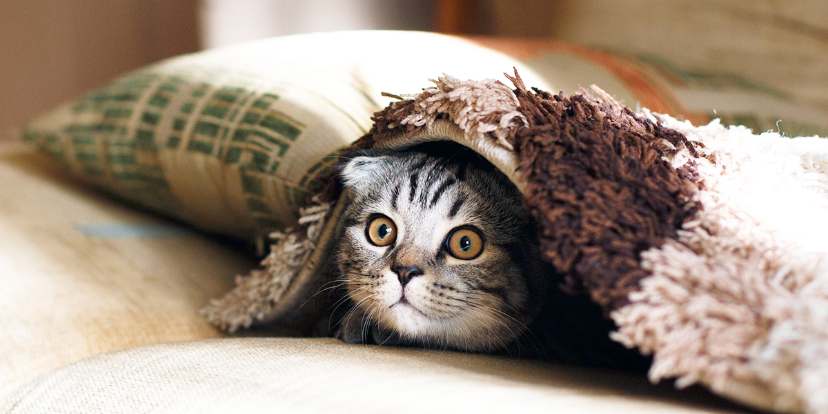 猫のさまざまな飼い方のメリットとデメリット